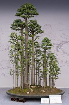 2013 international bonsai convention