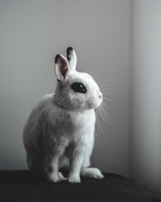 Photo by Tamas Tuzes-Katai on Unsplash Flora And Fauna, Hd Photos, Natural World, Drawing Reference, Mammals, Bunny, Pets, Drawings, Free Stock Photos