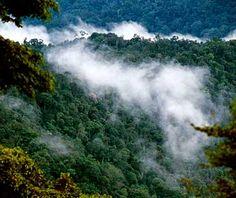 Kayan Mentarang National park, east Kalimantan, Borneo, Indonesia