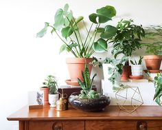 Let's bring some green into our homes and blogs! Tag your with #urbanjunglebloggers - The first #urbanjunglebook is out now! Via Amazon & stockists