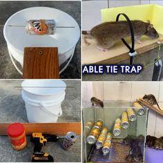Rat Trap Diy, Mouse Trap Diy, Backyard Chicken Coops, Chickens Backyard, Mouse Traps That Work, Homemade Mouse Traps, Bucket Mouse Trap, Catch A Mouse, Mice Repellent