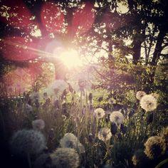 Light sun flower!  Follow #elle_erre on #instagram