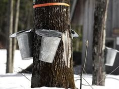 Maple sugaring season is here! Tap trees, collect sap, and see syrup made over a wood-fired evaporator. Stick around for a maple syrup sample! Stop by these Greater Toronto Area locations for tree tapping and syrup tasting this February, March, and April. Homemade Maple Syrup, Pancake Toppings, The Buckeye State, Sugaring, Pure Maple Syrup, Fine Wine, Ohio, Pure Products, Melbourne Brunch