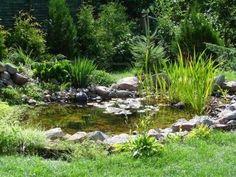 kleine tuin vijver Stockfoto - 523429