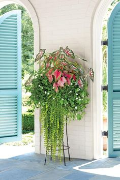 Shade-Loving Combo - Summer Container Gardens We're Obsessing Over - Southernliving. Combine caladiums, creeping Jenny, and white wishbone flower for a whimsical summertime container garden. Here, we used 'Celebration' and 'Florida Sweetheart' caladiums for a vibrant planter with a graceful spill of creeping Jenny from the elevated container.