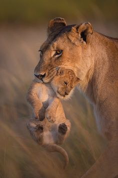 """I don't know how to """"reblog""""., captvinvanity: A Mother's love  ..."""