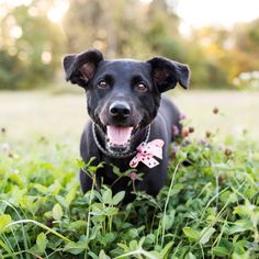 How to Snap the Perfect Pet Photo