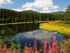 'Tranquility' - Schluchsee, a reservoir lake in the Black Forest near Freiburg im Breisgau, Germany;  photo by Batikart, via Flickr