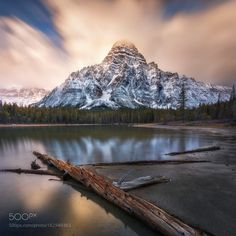 Late Gold by everlookphotography. Please Like http://fb.me/go4photos and Follow @go4fotos Thank You. :-)