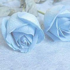 hugh dancy hannibal hannigram will gram hannibal lecter dads blue llight blue aesthetic light blue aesthetic Light Blue Aesthetic, Blue Aesthetic Pastel, Aesthetic Colors, Flower Aesthetic, Blue Aesthetic Tumblr, Roses Tumblr, Blue Feeds, Everything Is Blue, Bleu Pastel