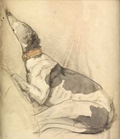 Olive Branson, 1885-1929 Sleeping Greyhound Pencil, pen and ink and wash; inscribed on backboard. 12.5 x 10.5 inches