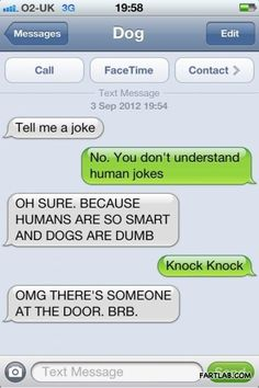 Dogs dont understand human jokes