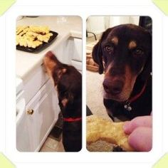 Homemade Peanut Butter Applesauce Dog Biscuits www.poochandclaws...  Pooch and Claws Homemade Peanut Butter Applesauce Dog Biscuits www.poochandclaws… Peanut Butter Dog Treats, Homemade Peanut Butter, Homemade Applesauce, Dog Biscuits, Doge, Dog Mom, Easy Meals, Easy Recipes, Claws