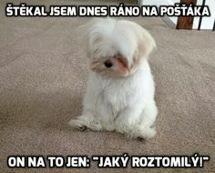 At The Mailman funny cute memes adorable dog pets meme lol funny quotes f. Barked At The Mailman funny cute memes adorable dog pets meme lol funny quotes f., Barked At The Mailman funny cute memes adorable dog pets meme lol funny quotes f. Funny Cute Memes, Funny Animal Jokes, Cute Funny Animals, Funny Animal Pictures, Cute Baby Animals, Funny Shit, Funny Dogs, Funny Quotes, Funny Humor