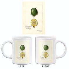 Feijoa - Acca Sellowiana - 1909 - Fruit Illustration Mug – Poster-Rama Fruit Illustration, White Ceramics, Coffee Mugs, Custom Design, Tableware, Plants, Poster, Animals, Products