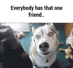 Funny Animal Pictures, Cute Funny Animals, Funny Cute, Funny Dogs, Hilarious, Dog Memes, Funny Memes, Cute Puppies, Cute Dogs