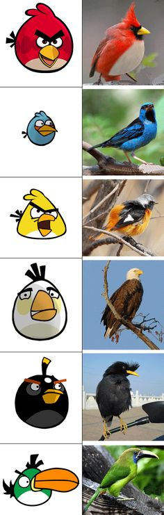 angry birds and their....