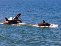 Whale watching in Bodega Bay, CA