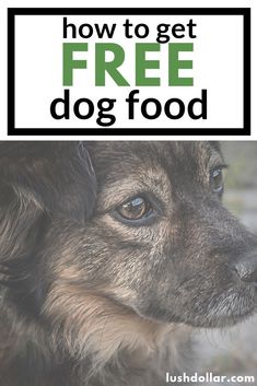 Want free dog food samples? Here are companies that will mail you samples directly to your doorstep. All LEGIT. Free Dog Food Samples, Free Samples By Mail, Free Stuff By Mail, Get Free Stuff, Typing Jobs From Home, Free Samples Without Surveys, Free Coupons By Mail, Dog Illnesses, Apple Cider Vinegar For Skin