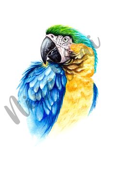 Watercolor Bird, Watercolor Drawing, Bird Drawings, Parrot, Sketches, Illustration, Animals, Image, Parrot Bird