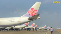 The plum blossoms were blooming this morning at the China Airlines hub at Taiwan Taoyuan International!