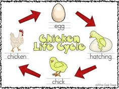 All About Chickens Life Cycle and White Desk Design, Subtraction Activities, Chicken Life, Life Cycles, Phonics, Literacy, Writing, Math, Words