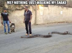 Just walking my snake. Dogs? How overrated. . .