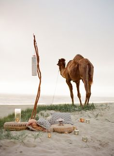 Cozy- Beachy- Eclectic