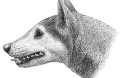 A 12-million-year-old fossil unearthed in Maryland represents a new dog species with a strong bite. Learn more @ http://www.seeker.com/dog-fossil-represents-new-species-of-bone-crusher-1793787926.html?sf26188881=1