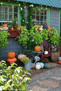 Potting Shed: Fall Window Boxes and Pumpkins - Flower Pot Arrangements Fall Window Boxes, Window Box Flowers, Fall Flower Boxes, Fall Flowers, Flowers Garden, Landscape Design, Garden Design, Fall Landscape, Garden Windows
