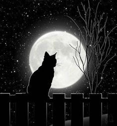 Silent Night Cat and full moon Art Print by glimmersmith Black Cat Drawing, Moon Drawing, Black Cat Painting, Black Cat Aesthetic, Cat Wallpaper, Cat Sitting, Silent Night, Moon Art, Cat Art