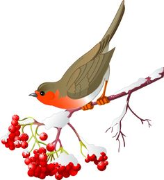 Cute Robin sitting on mountain ash branch. Isolated on white background. Wildlife illustration by Dazdraperma. You may easily purchase this image as Guest without opening an account. Robin Drawing, Bird Nest Craft, Bird Clipart, Bird Sketch, Bird Houses Painted, Robin Bird, Bird Wings, Bird Theme, Bird Silhouette
