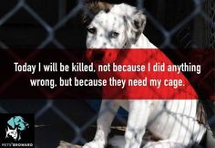 Adopt A Shelter Dog or Cat! This is horrible. Please help prevent this.