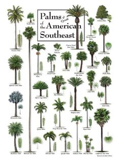 """Puzzles,palms of the American Southeast 550 Pieces, 24"""" X 18"""" HP001 http://www.amazon.com/dp/B00ZV08XQM/ref=cm_sw_r_pi_dp_7nIGvb1TTK33H"""