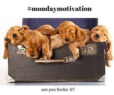 #Mondaymotivation - are you feelin' it? #petboardingreviews
