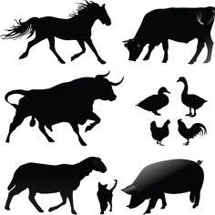 Domestic Animal Vectors | Free Vector Downloads