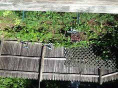 Organize your garden