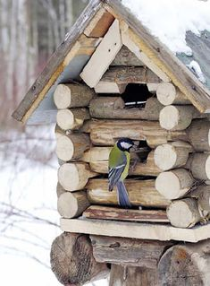 Bird House Kits Make Great Bird Houses Bird House Feeder, Bird Feeder, Bird House Kits, Bird Boxes, Kit Homes, Bird Cage, Yard Art, Bird Feathers, Beautiful Birds