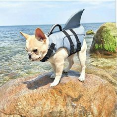 If your pup is a sinker and not a swimmer, our Dolphin Fin Life Jacket will help them tread water and stay cool! (IG: overtwentyfive)