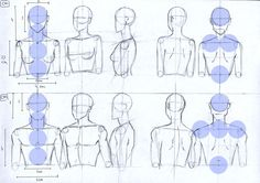 Female and Male anatomy proportions head and torso by Lucis7.deviantart.com on @deviantART
