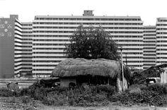 대치동 [Daechi-dong, 大峙洞] Seoul, Korea, 1981  사진 권태균  서울 강남 대치동 은마아파트 앞 초가집