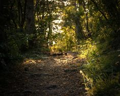 What a beautiful show prepared for me the sun when I was walking down this hiking path. #hike #nature #forest #hikingpath #sun #sunlight #sunset #austria Vienna Austria, Sunlight, Mother Nature, Paths, To Go, Hiking, Country Roads, Sunset, Beautiful