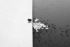 Black and white photography. Detail of an once-in-a-lifetime image of a Man Feeding Swans in the Snow in Krakow, Poland by Marcin Ryczek. Black White Photos, Black And White Photography, White Picture, Picture Man, Photo Black, Street Photography, Art Photography, Photography Awards, Winter Photography