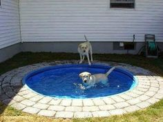 Dog Pond - Place a plastic kiddie pool in the ground. It'd be easy to clean and looks nicer than having it above ground. Big dogs can't chew it up or drag it around. Not into it being a dog pond but would be cute for a kiddie pool or pond :) Dog Pond, Diy Pet, Kiddie Pool, Exterior, Outdoor Projects, Backyard Projects, Diy Projects, Backyard Ideas, Dog Backyard