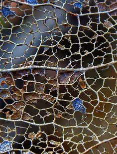 Leaf Skeleton by jhhwild, via Flickr