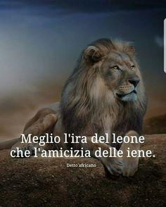 MEGLIO L'IRA DEL LEONE CHE L'AMICIZIA DELLE IENE Wise Quotes, Inspirational Quotes, Success Quotes, Qoutes, Motivational Quotes, Celine, Italian Life, Lion Of Judah, Photo Quotes
