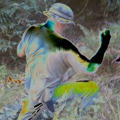 #cazadero #work #sonoma #psychodelic #art Photo Contest, Bird, Pets, Animals, Pageant Photography, Animales, Animaux, Photography Challenge, Birds