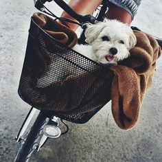 Must have a basket on your bicycle!