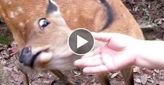 I PROMISE that YOU will get A LAUHG ATTACK  FUNNY ANIMAL compilation