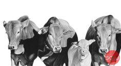 Reid Studios - Art by Vincent Reid - located in Howick Pencil Art, Art Studios, Wildlife, Gallery, Animals, Animales, Roof Rack, Animaux, Animal